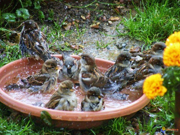 1000 id es sur le th me abreuvoir oiseaux sur pinterest - Fabriquer abreuvoir oiseaux ...