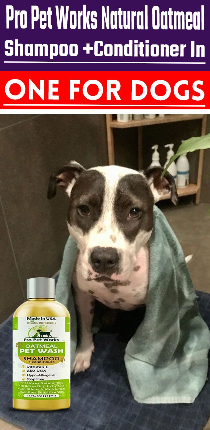 Pro Pet Works Natural Oatmeal Shampoo Conditioner In One For Dogs Cats Oatmeal Dog Shampoo Dog Conditioner Cat Shampoo