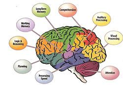 Executive Function Therapy for Academic Success