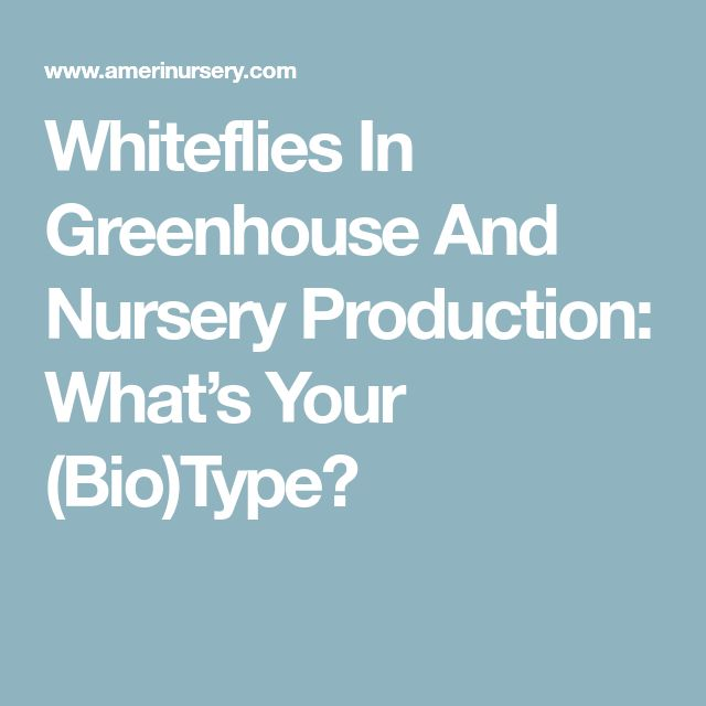 Whiteflies In Greenhouse And Nursery Production: What's Your (Bio)Type?