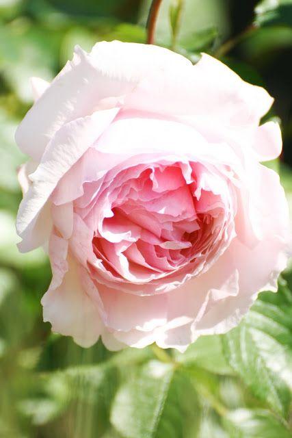38 best Garten  Pflanzen images on Pinterest Decks, Flower beds