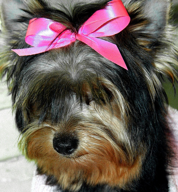 34 best doggy syles images on pinterest pets doggies and project a new baby in for her first trim miss sophie discoverlearnhow to make money with your very own successful dog grooming business in just 12 simple solutioingenieria Gallery