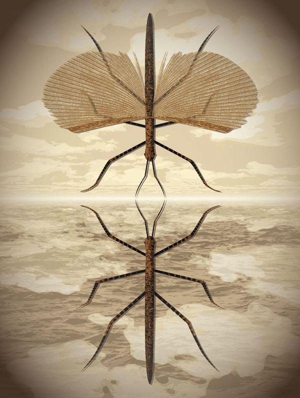 Nautilus © Daniel Hertzberg #illustration