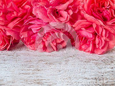 Pink double roses on the white rustic background