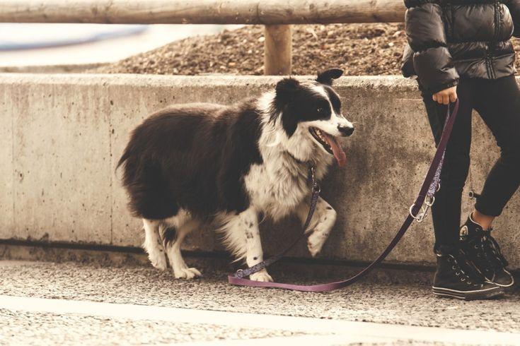 Hund und Leine