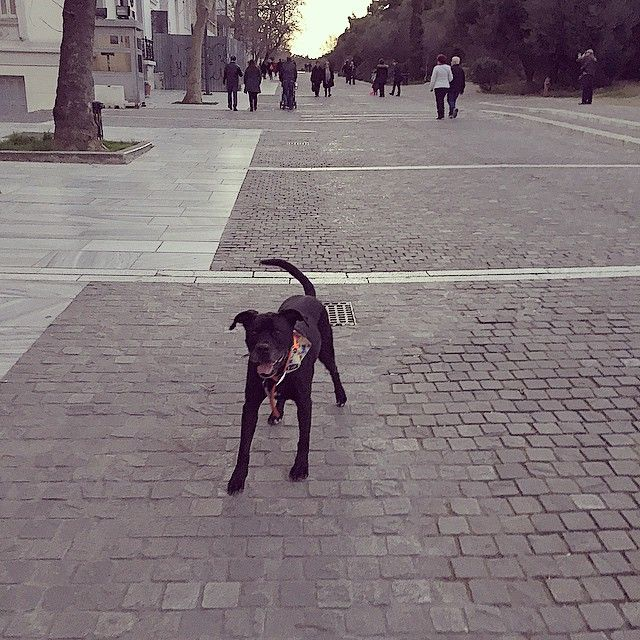 Mushi for walkies in the heart of Athens <3