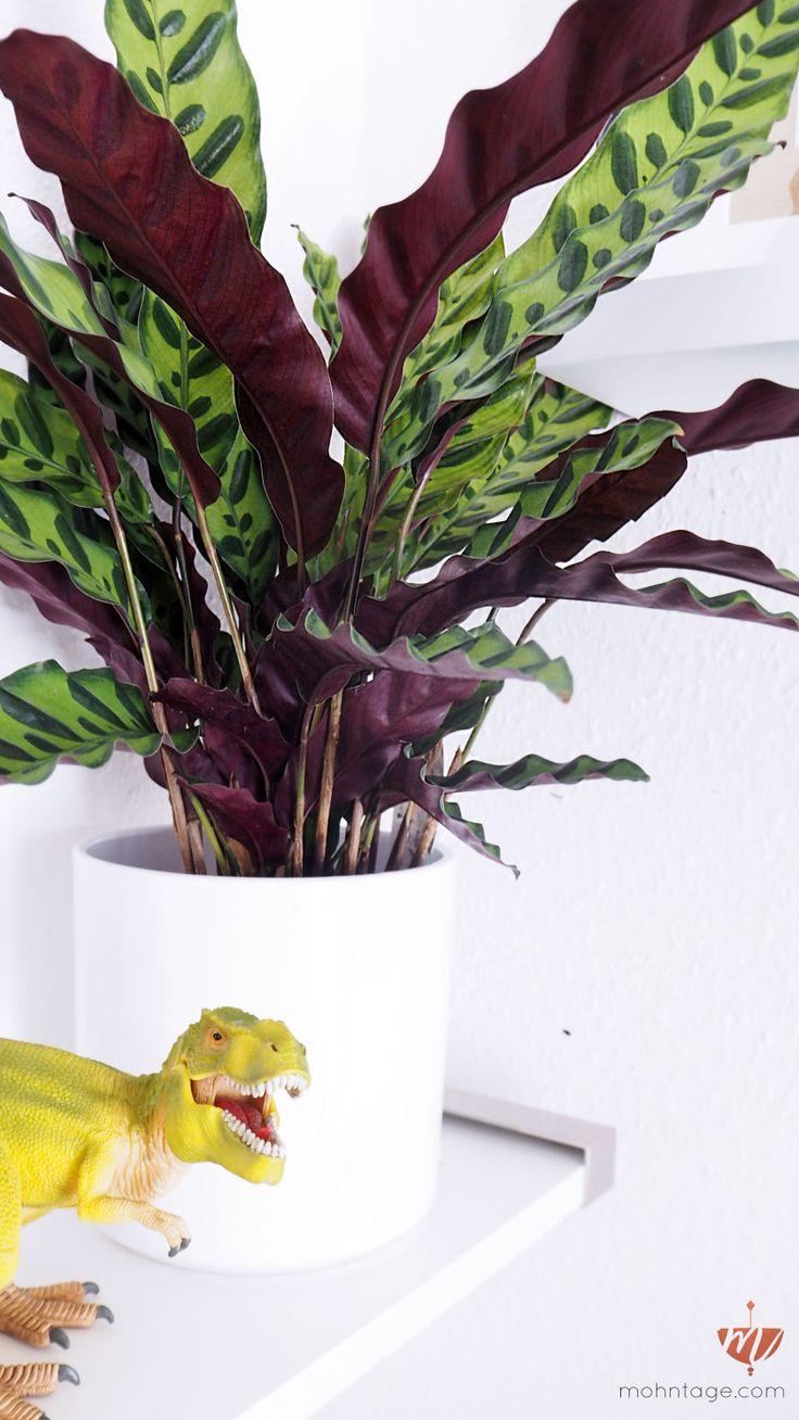 die besten 25 ungiftige pflanzen f r katzen ideen auf. Black Bedroom Furniture Sets. Home Design Ideas