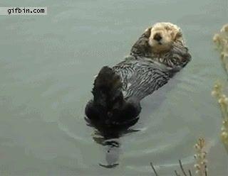 15 razones por las que ya somos fans de Cuánta Fauna #curiosidades #animales #amor #cute #humor