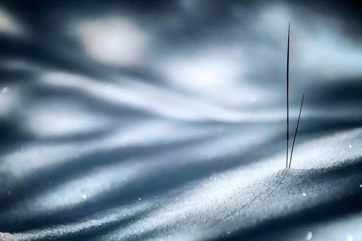 Cold by Ursula Abresch on 500px