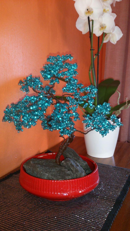Lucky tree- bonsai