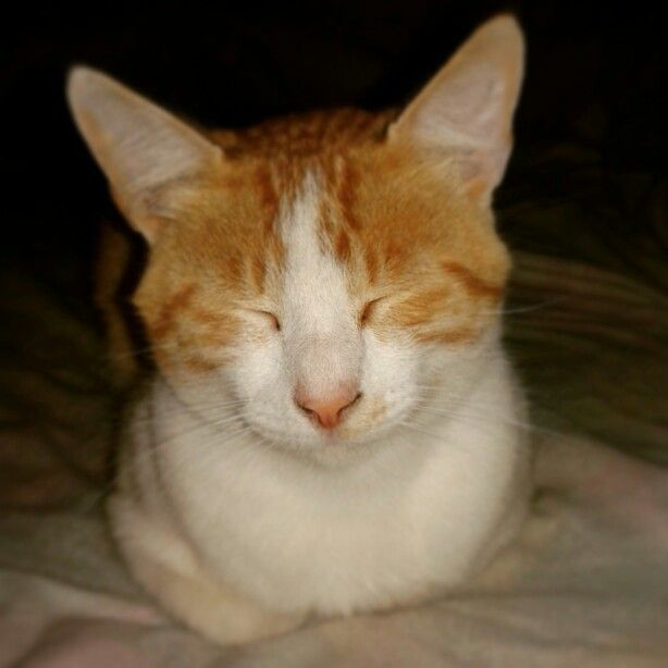 #Pelusa porque siempre estas durmiendo y ademas no te pongas celosa por pompom #instacat #cat #gato