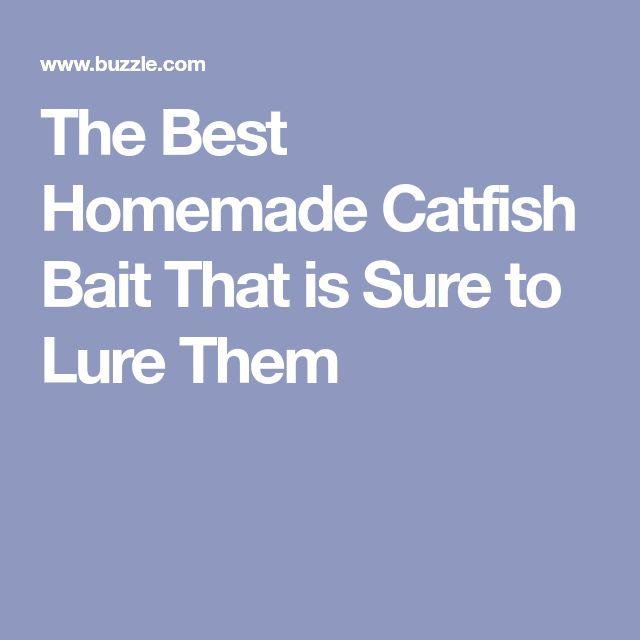 The Best Homemade Catfish Bait That is Sure to Lure Them