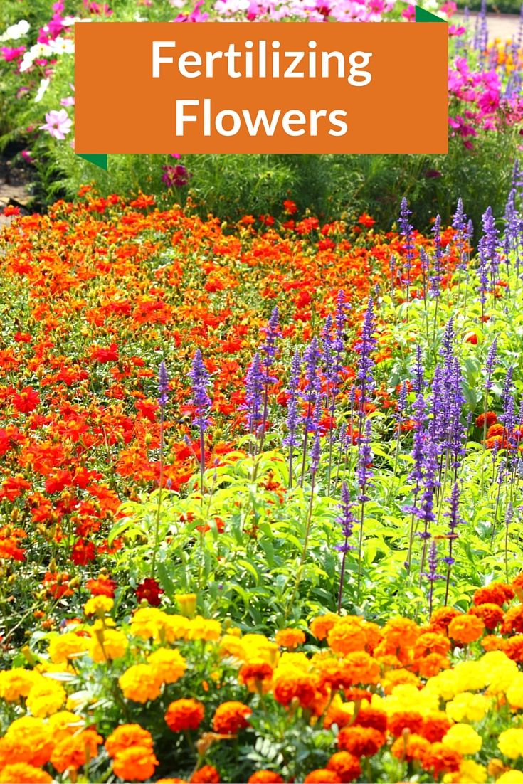 583 best annual bordersgardens images on pinterest annual flowers annuals and perennials require different fertilizer application rates learn how to properly fertilize your flowers izmirmasajfo
