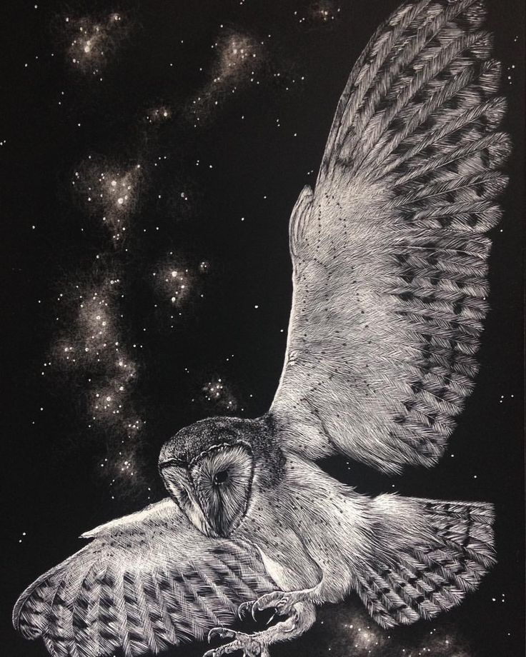 Gives me an idea...Of starlight and feathers. As soft as shadows, as quiet as air. On wings of white she glides. The owl is the symbol of wisdom and darkness, magic and prophecy. Etched onto #ampersand #scratchboard with a No11 x-acto blade. #eirlysandmayart