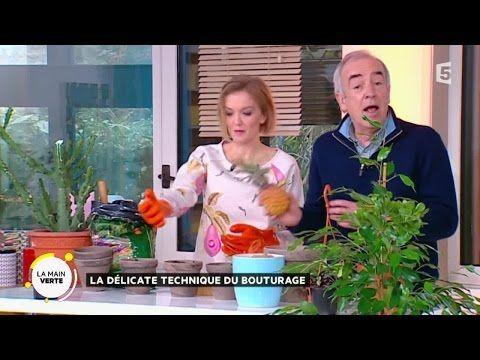 1000 id es sur le th me bouture d hortensia sur pinterest bouture hortensia entretien - Comment bouturer un hortensia ...