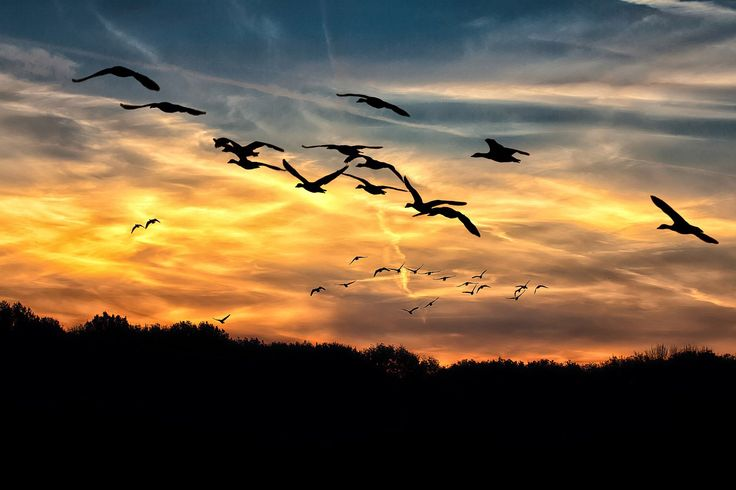 Aves migratorias: lo lejos que se puede llegar despacio | Fundación Aquae | Fundación del Agua