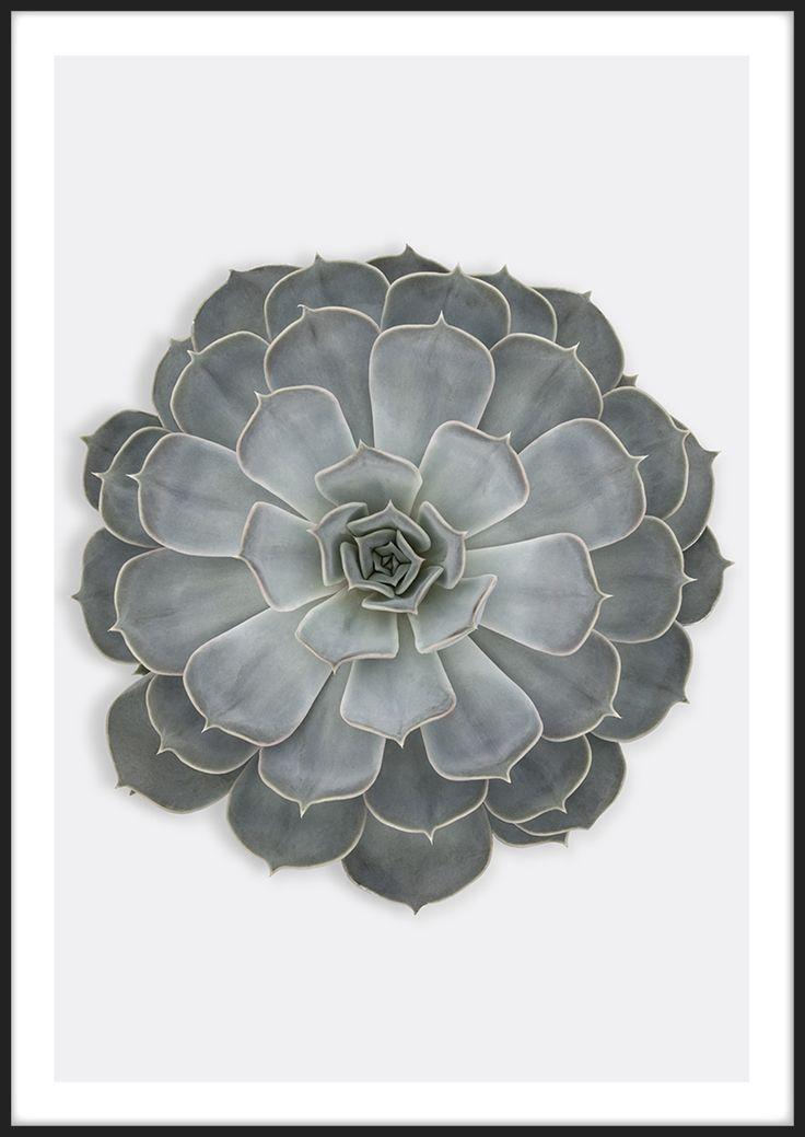 Succulent, från Insplendor med Giclée Fine Art Print-teknik