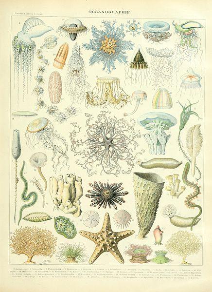 Oceanography illustration of the Nouveau Larousse illustré, Adolphe Millot, public domain via Wikimedia Commons.