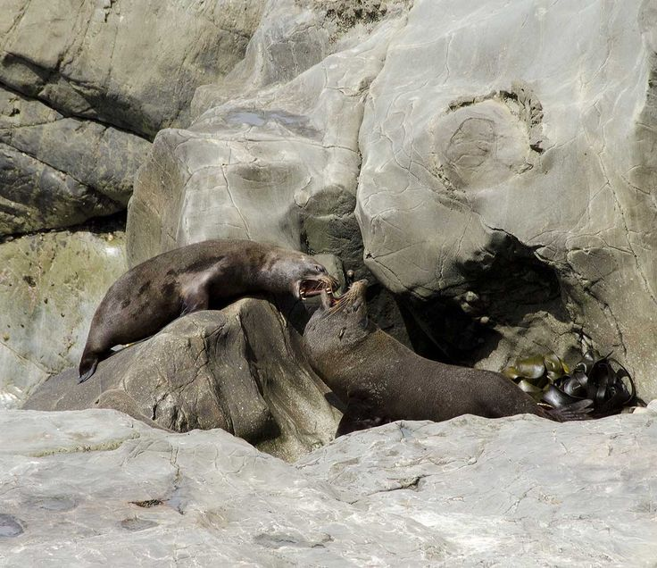 Playful fighting on the rocks