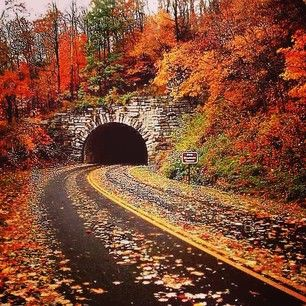 Maybe you'll encounter a scene like this on one of America's Best Fall Color Drives. Photo courtesy of dayflowerdream on Instagram.
