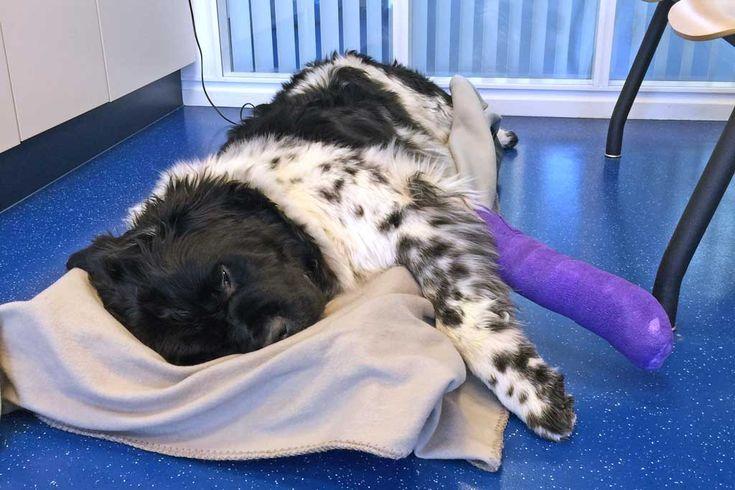 Een ziektekostenverzekering voor je hond?