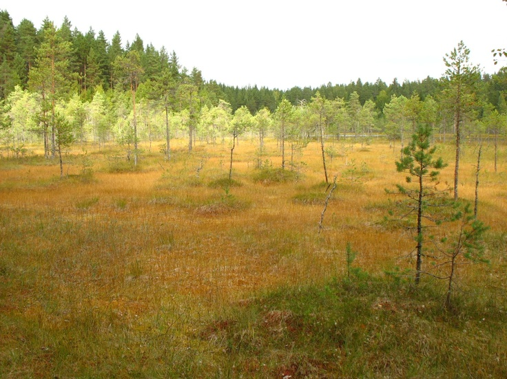 Leivonmäen kansallispuistossa voi tutustua erityisesti suo- ja harjuluontoon. In one of the youngest National Park in Finland, you can experience the diversity of the natural features of Central Finland Region. Kuva/Photo: Metsähallitus / Jere Ekosaari    www.luontoon.fi/leivonmaki  http://www.facebook.com/MatkaMaalle  http://www.keskisuomi.net/  http://www.centralfinland.net/