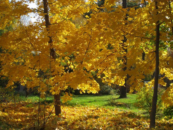 Autumn in Finland, Espoo.