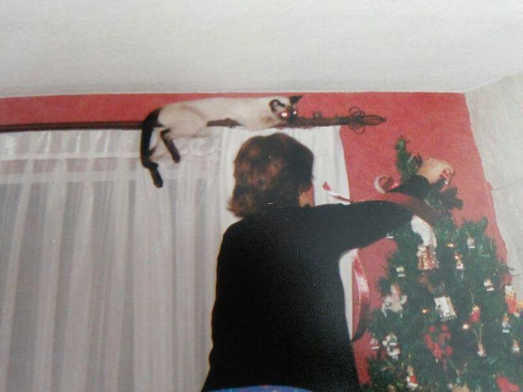 Bellota de navidad