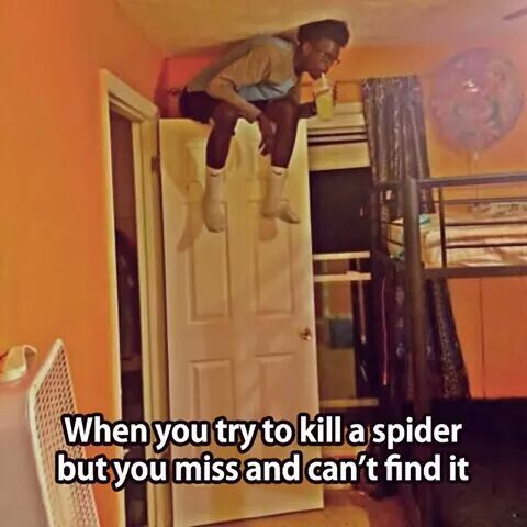 When you try to kill a , spider, but miss and, can't find it, sitting on top of door, meme