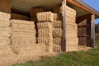 Terry Grossman provides a detailed guide to growing, harvesting, and baling hay for your homestead. Originally published as