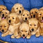 Clinici veterinare unde câinii se sterilizează GRATUIT în București