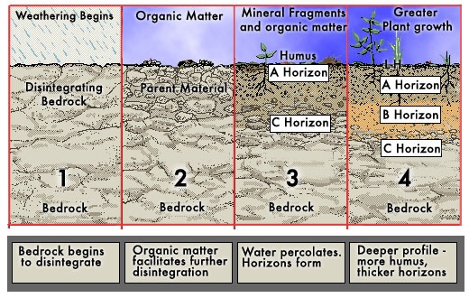Soil formation images galleries with for Soil formation