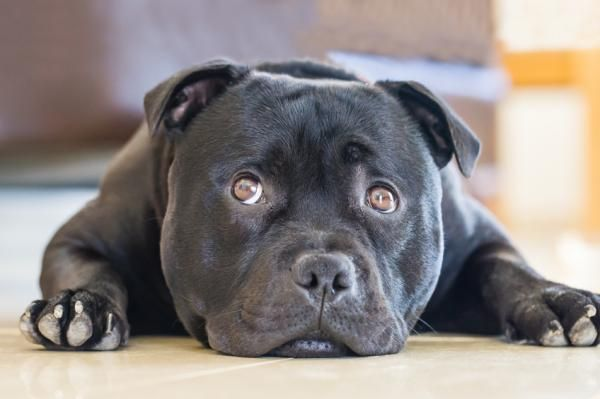 Perros peligrosos, ¿realmente existen?
