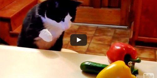 Porque los gatos le temen a los pepinos