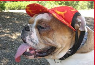 dog cap patterns - mimi&tata - free dog cap pattern - so making one ofthese for Sammy!