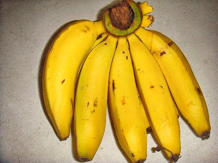 The Lacatan banana is one of the varieties of banana grown in Jamaica, they are usually longer in length than the other variety The Gros Michel.