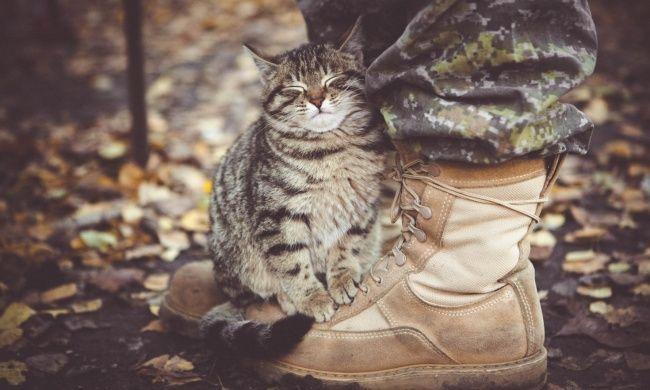 «Один мой друг подбирает бездомных кошек...»