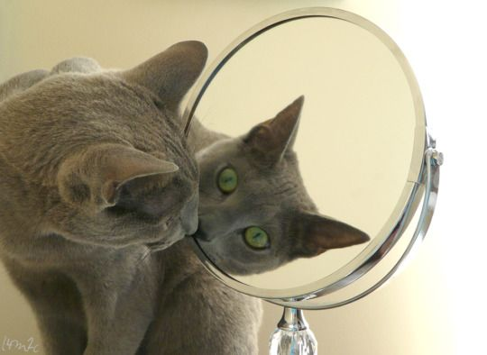 My photography of our 2 cats...
