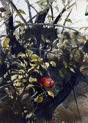 Late Fall, 1981, Andrew Wyeth