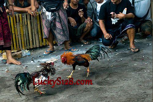 Agen Taruhan Sabung Ayam S128 Live Streaming