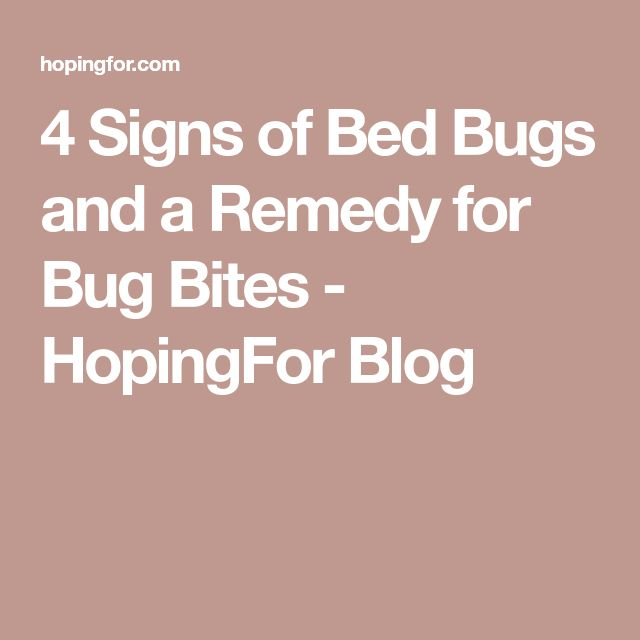 4 Signs of Bed Bugs and a Remedy for Bug Bites - HopingFor Blog