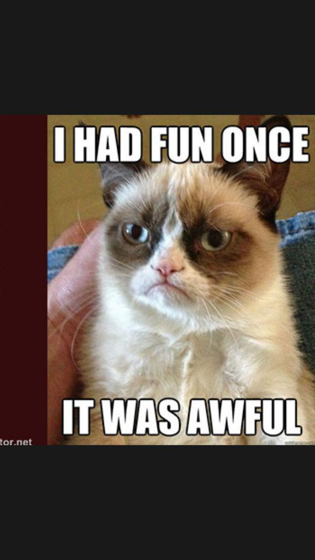 grumpy cat wedding invitations%0A Grumpy Cat  Cats  Gatos  Kitty Cats  Kitty  Grumpy Cats  Grump Cat