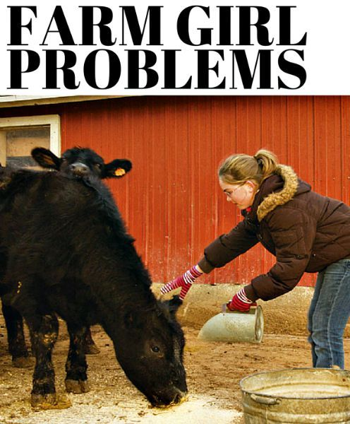 4215 best images about Show cattle/country/farming/FFA/4-H ...