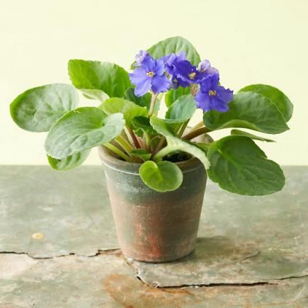 You have plant-eating pets  Try African violets, which, according to the American Society for the Prevention of Cruelty to Animals, won't harm pets. They do well in artificial light or indirect sunlight, producing adorable flowers in lavender, pink and white. More picks: Gloxinia and bamboo palm.