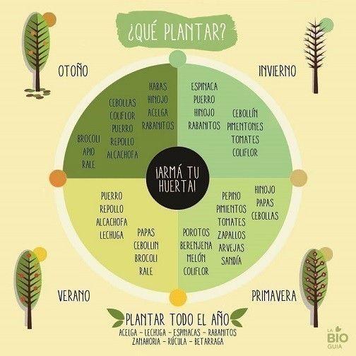 Qué plantar en cada época del año