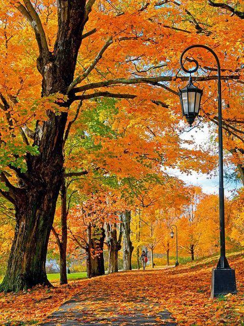 New England Autumn