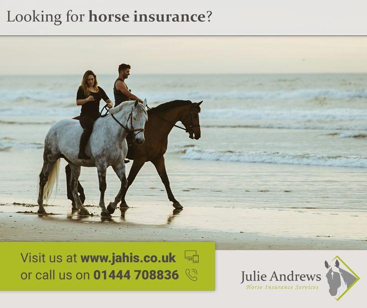 Horse insurance horses insurance animals