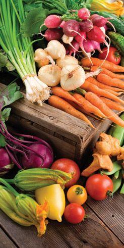 fresh veggies out of a garden