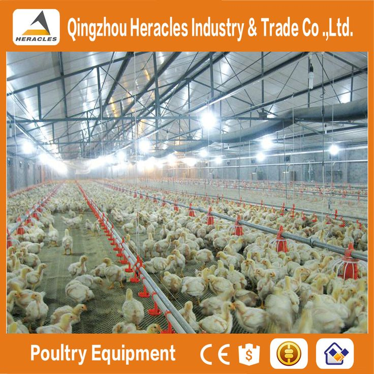 Heracles good quality poultry equipment for broiler in South Africa