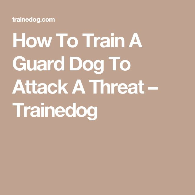 How To Train A Guard Dog To Attack A Threat – Trainedog